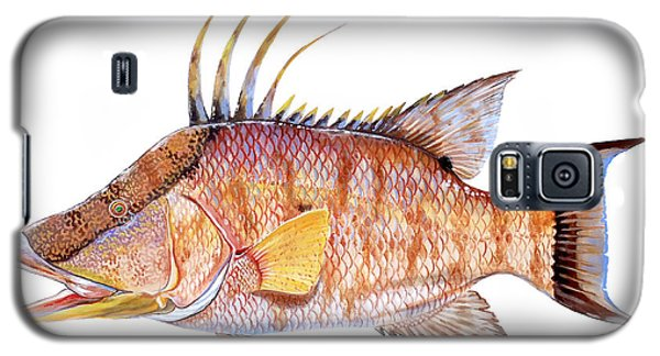 Hog Fish Galaxy S5 Case by Carey Chen
