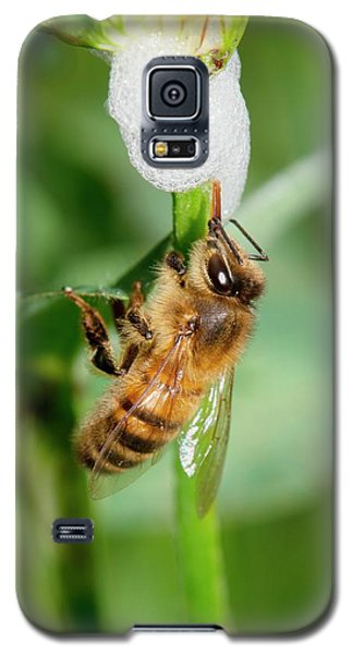 Honey Bee Drinking From Cuckoo-spit Galaxy S5 Case by Dr. John Brackenbury