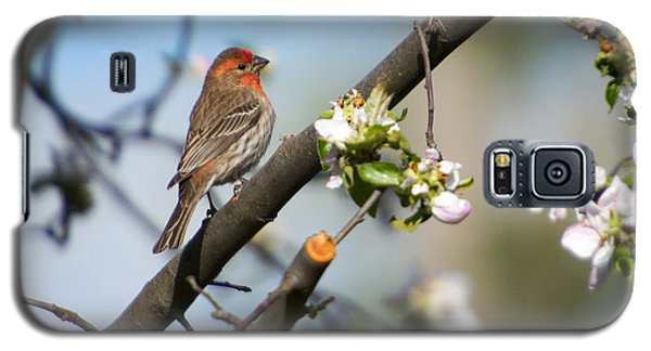 House Finch Galaxy S5 Case by Mike Dawson