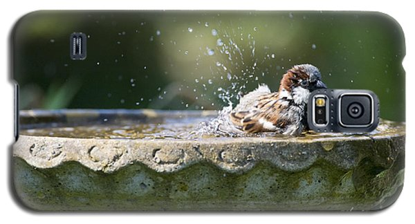 House Sparrow Washing Galaxy S5 Case by Tim Gainey