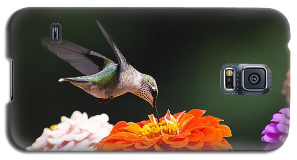Hummingbird In Flight With Orange Zinnia Flower Galaxy S5 Case by Christina Rollo