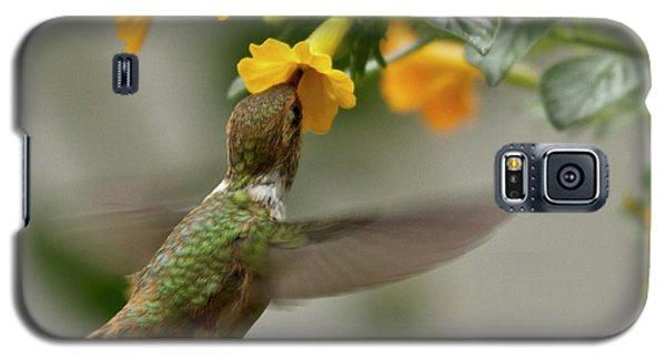 Hummingbird Sips Nectar Galaxy S5 Case by Heiko Koehrer-Wagner