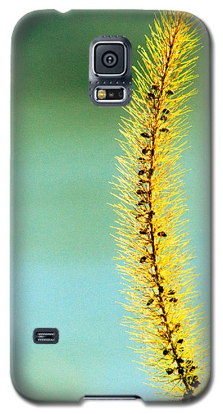 Plant Galaxy S5 Cases - In Time Galaxy S5 Case by Bob Orsillo