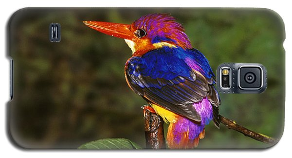 India Three Toed Kingfisher Galaxy S5 Case by Anonymous