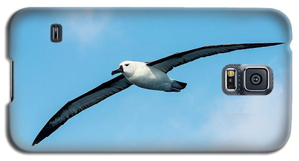 Indian Ocean Yellow-nosed Albatross Galaxy S5 Case by Peter Chadwick