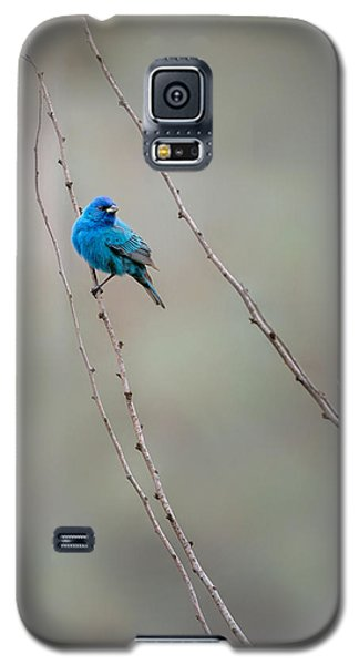 Indigo Bunting Galaxy S5 Case by Bill Wakeley