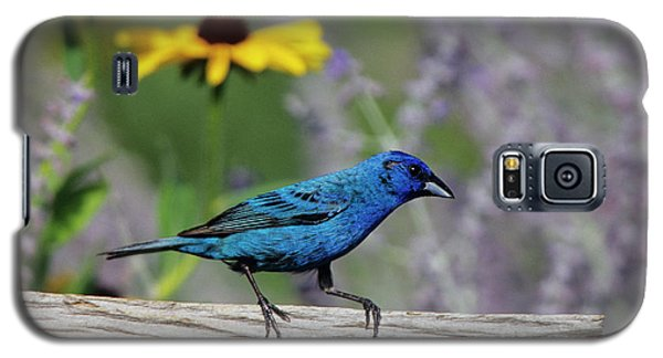 Indigo Bunting (passerina Cyanea Galaxy S5 Case by Richard and Susan Day