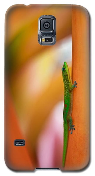 Island Friend Galaxy S5 Case by Mike Reid