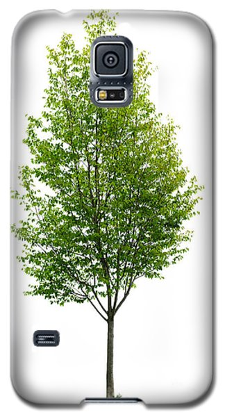 Tree Galaxy S5 Cases - Isolated young tree Galaxy S5 Case by Elena Elisseeva