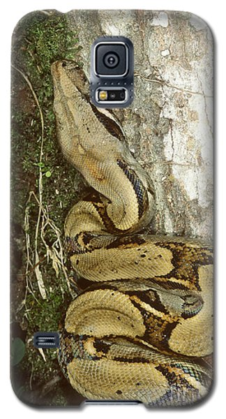 Juvenile Boa Constrictor Galaxy S5 Case by Gregory G. Dimijian, M.D.