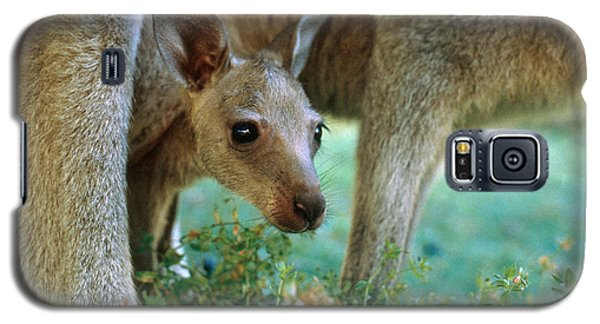 Kangaroo Joey Galaxy S5 Case by Mark Newman