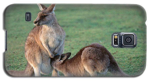 Kangaroo With Joey Galaxy S5 Case by Gregory G. Dimijian, M.D.