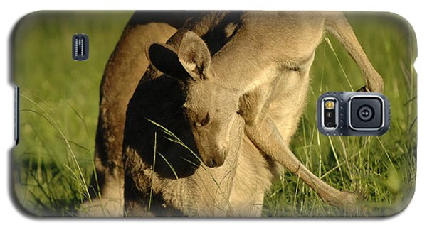 Kangaroos Taking A Bow Galaxy S5 Case by Bob Christopher