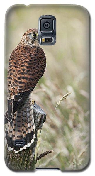 Kestrel Galaxy S5 Case by Tim Gainey