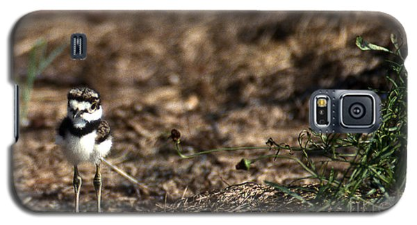 Killdeer Chick Galaxy S5 Case by Skip Willits