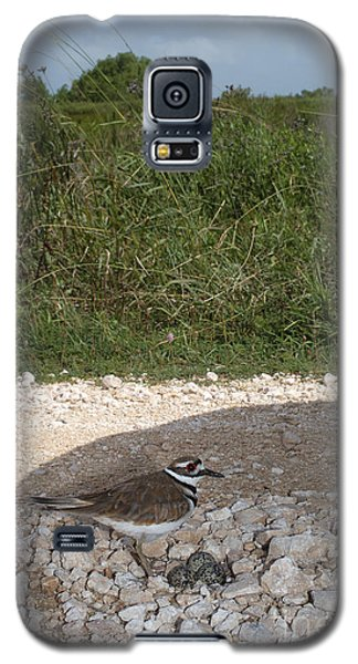 Killdeer Defending Nest Galaxy S5 Case by Gregory G. Dimijian