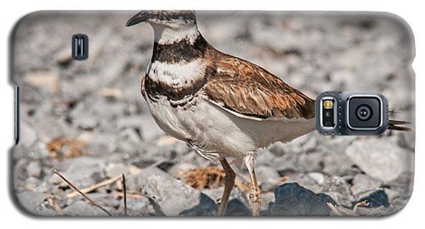 Killdeer Nesting Galaxy S5 Case by Lara Ellis