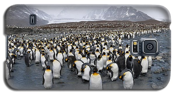 King Penguins Aptenodytes Patagonicus Galaxy S5 Case by Panoramic Images