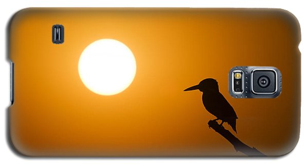 Kingfisher Sunset Galaxy S5 Case by Tim Gainey