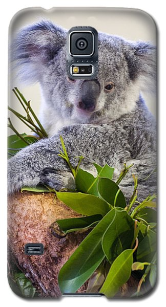 Koala On Top Of A Tree Galaxy S5 Case by Chris Flees