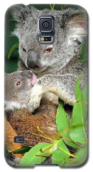 Koalas Galaxy S5 Case by Bildagentur-online/mcphoto-schulz