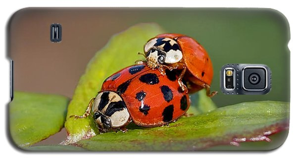 Ladybird Coupling Galaxy S5 Case by Rona Black