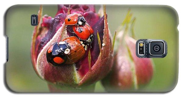 Ladybug Foursome Galaxy S5 Case by Rona Black