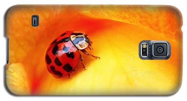 Ladybug Galaxy S5 Case by Rona Black