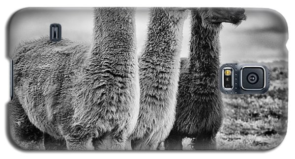 Lama Lineup Galaxy S5 Case by John Farnan