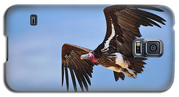 Lappetfaced Vulture Galaxy S5 Case by Johan Swanepoel