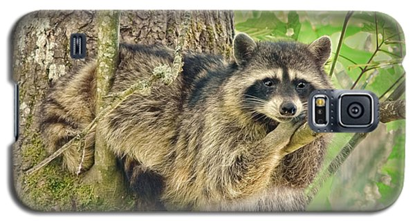 Lazy Day Raccoon Galaxy S5 Case by Jennie Marie Schell