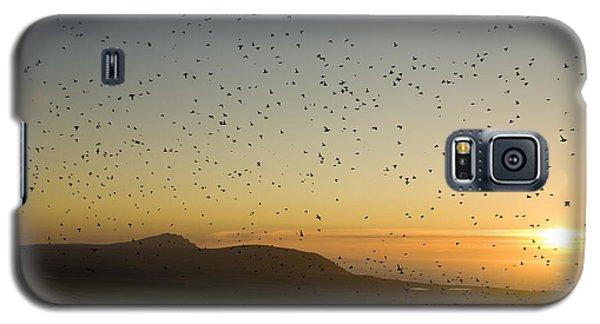 Least Auklets, Returning To Their Nest Galaxy S5 Case by Brian Guzzetti