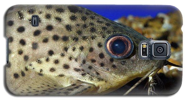 Leopard Sailfin Pleco Galaxy S5 Case by Nigel Downer