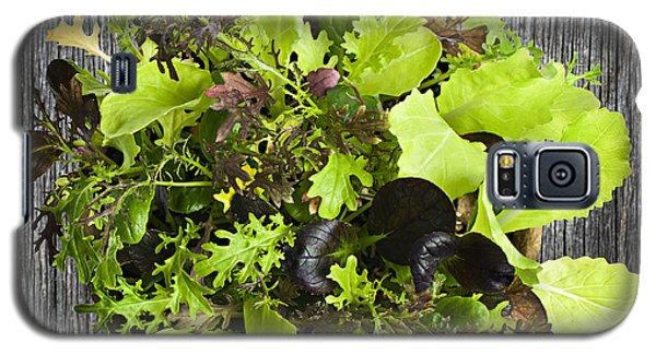 Lettuce Seedlings Galaxy S5 Case by Elena Elisseeva