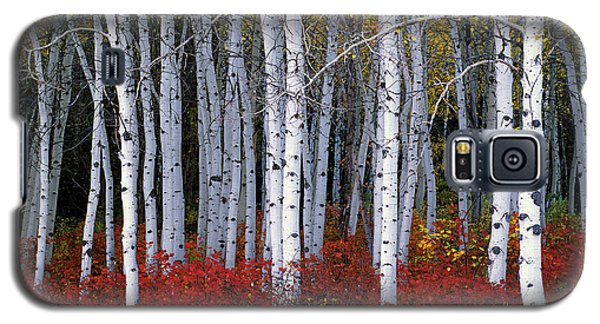 Yellow Galaxy S5 Cases - Light in Forest Galaxy S5 Case by Leland D Howard