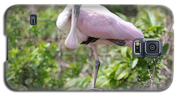 Light Pink Roseate Spoonbill Galaxy S5 Case by Carol Groenen