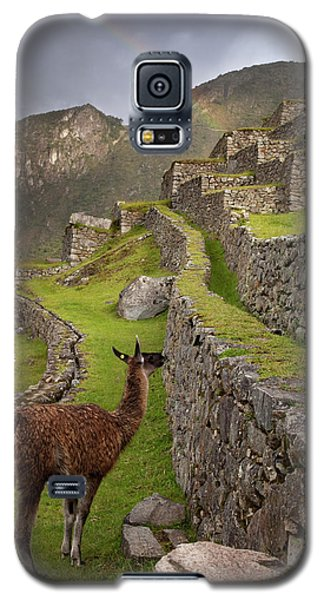 Llama Stands On Agricultural Terraces Galaxy S5 Case by Jaynes Gallery