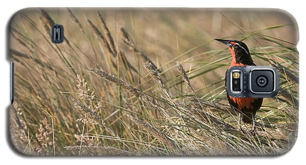 Long-tailed Meadowlark Galaxy S5 Case by John Shaw