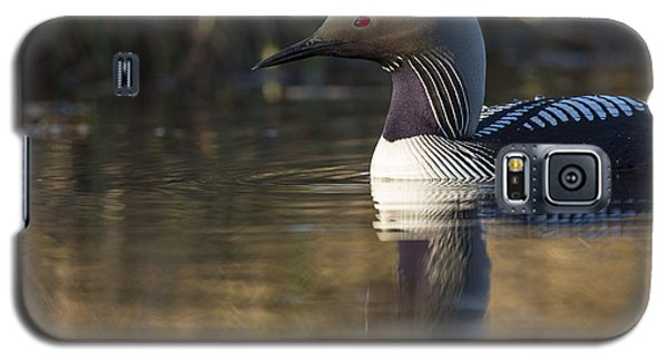 Looking For A Nest Site Galaxy S5 Case by Tim Grams