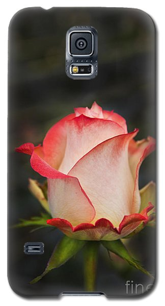 Love Is A Rose II Galaxy S5 Case by Al Bourassa