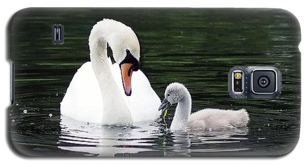 Lunchtime For Swan And Cygnet Galaxy S5 Case by Rona Black