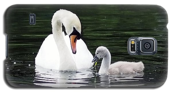 Green Galaxy S5 Cases - Lunchtime for Swan and Cygnet Galaxy S5 Case by Rona Black