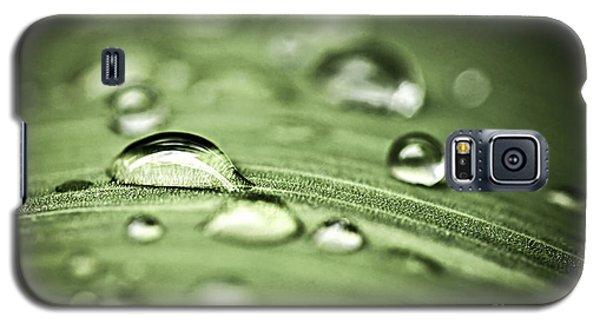 Plant Galaxy S5 Cases - Macro raindrops on green leaf Galaxy S5 Case by Elena Elisseeva