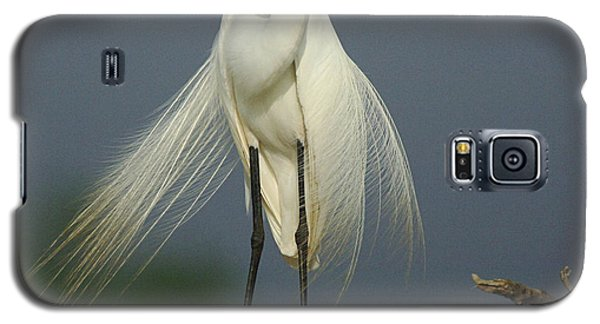 Majestic Great Egret Galaxy S5 Case by Bob Christopher