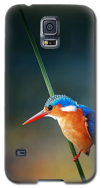 Malachite Kingfisher Galaxy S5 Case by Johan Swanepoel