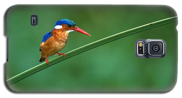 Malachite Kingfisher Tanzania Africa Galaxy S5 Case by Panoramic Images