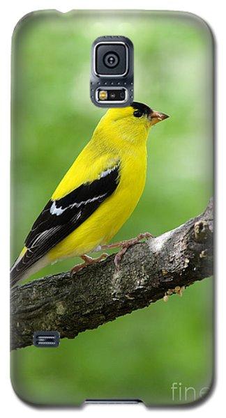 Male American Goldfinch Galaxy S5 Case by Thomas R Fletcher