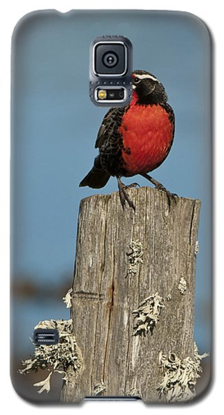 Male Long-tailed Meadowlark On Fencepost Galaxy S5 Case by John Shaw