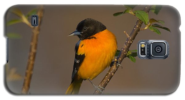 Male Northern Oriole Galaxy S5 Case by Thomas and Pat Leeson
