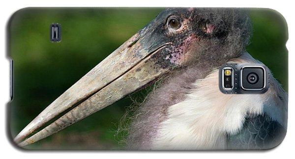Marabou Stork Galaxy S5 Case by Nigel Downer